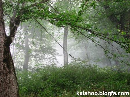 به یاد آن جنگل سبز ... به قلم: عباث